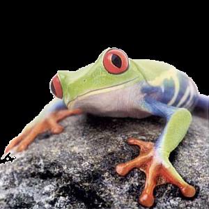 frog-ico